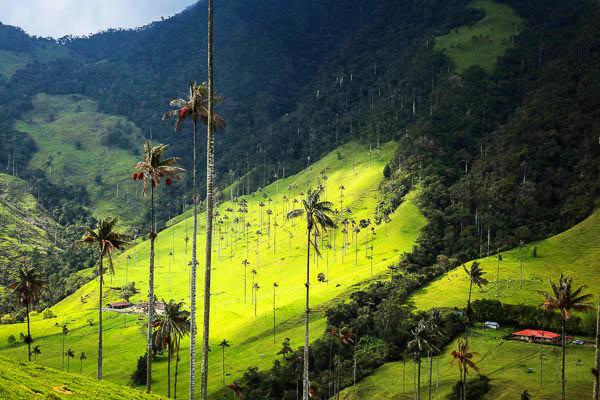 quindio-eje-cafetero-valle-del-cocora-colombia-palma de cera, Valle del Cocora©-camille-ayral-USO LIBRE-30