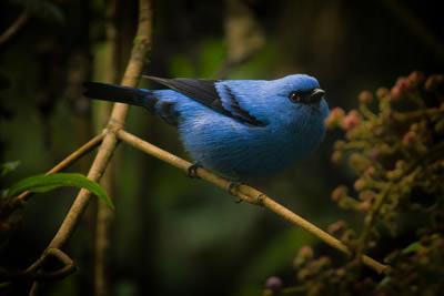 5 Meilleures Régions pour l'Ornithologie en Colombie
