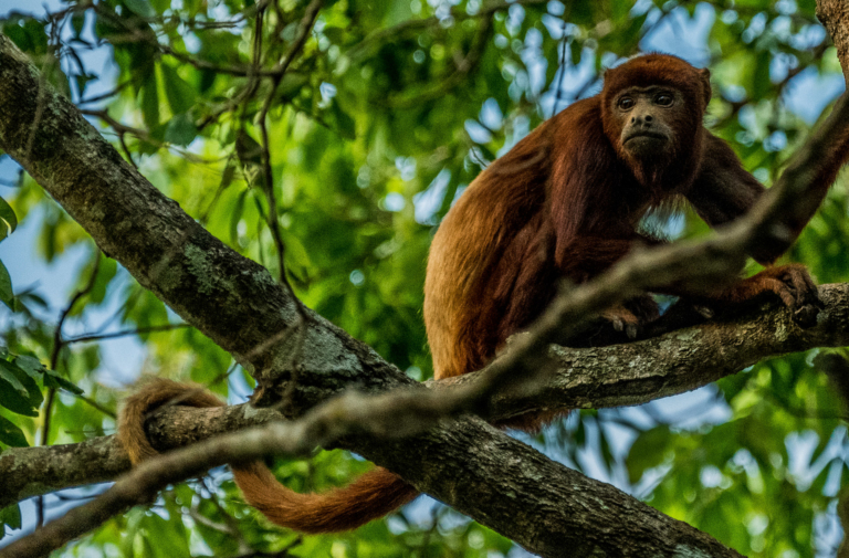Encanto de Guanapalo Reserve: Travel Guide