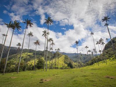valle de cocora quindio eje cafetero colombia 5© Tristan Quevilly