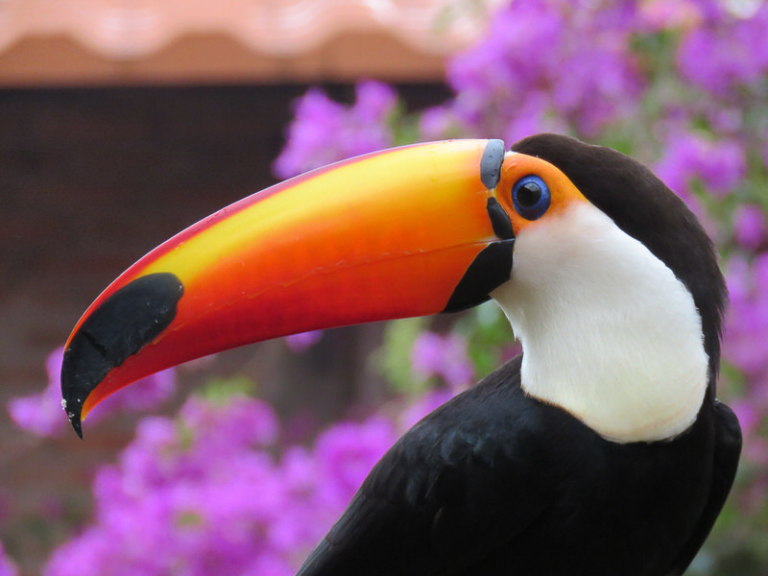 The must-see places for birdwatching in Colombia