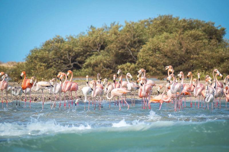 La Guajira desierto colombia Flamand Rose flamingos Guajira©samuel et angelica mon voyage en colombie SOLO AC