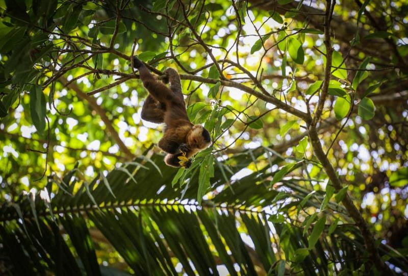 magdalena parque tayrona colombia parque Tayrona Titi© camille ayral SOLO AC